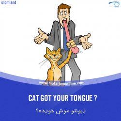 Cat Got Your Tongue